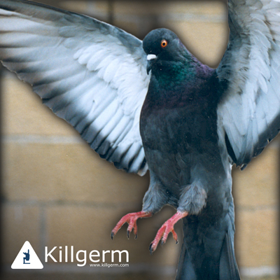 Commercial Property Pigeon Removal by trusted Bird Control Companies